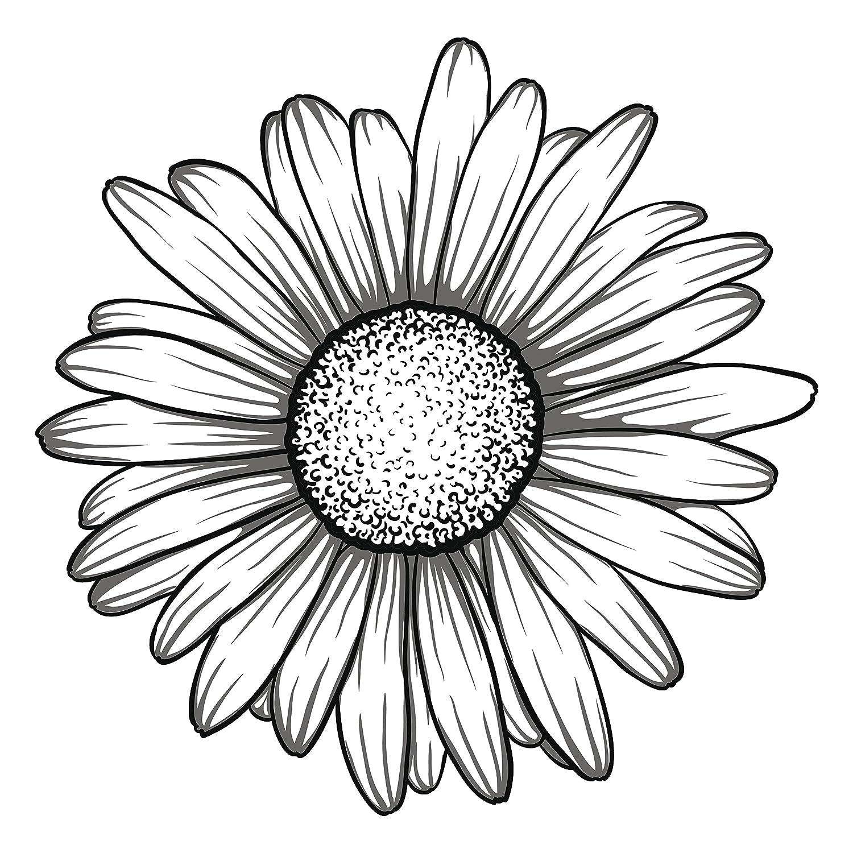 Amazon Black And White Gerbera Gerber Daisy Flower Vinyl Decal