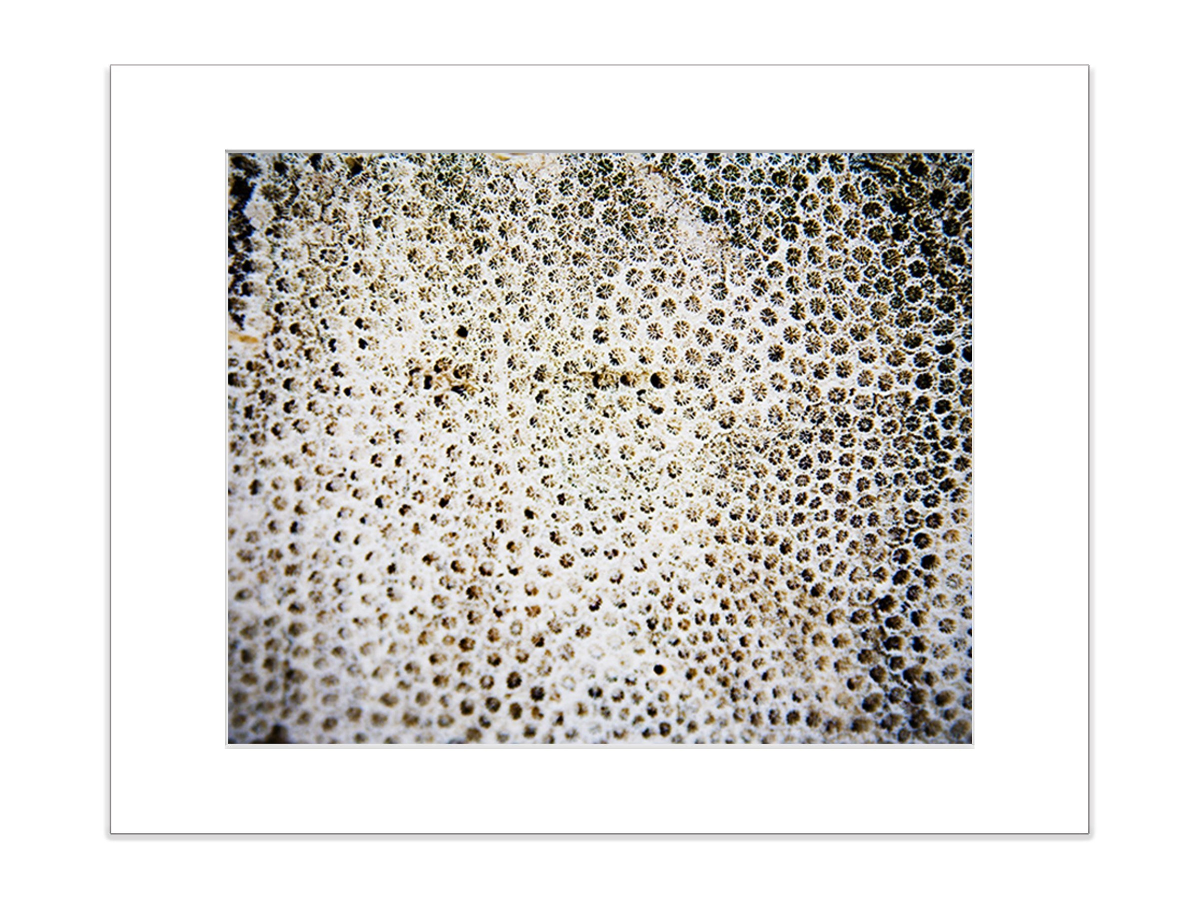 Abstract Coral Reef Marine Life Underwater Beach 5x7 Inch Matted Photograph