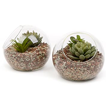 7 Inch Glass Ball Terrarium, Tabletop Air Plant Display Globe, Set Of 2