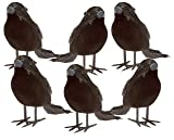 Prextex Halloween Black Feathered Small Crows - 6