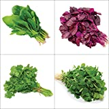 Only For Organic Combo Of Leafy Vegetable (Four Varieties : 150 Quantity Each)
