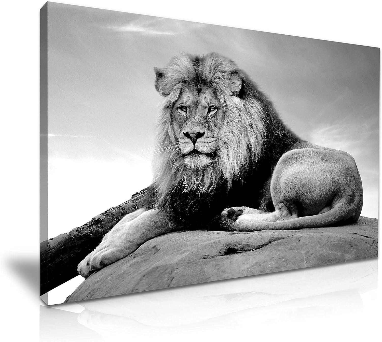 Lion Canvas Wall Art Picture Print 76x50cm