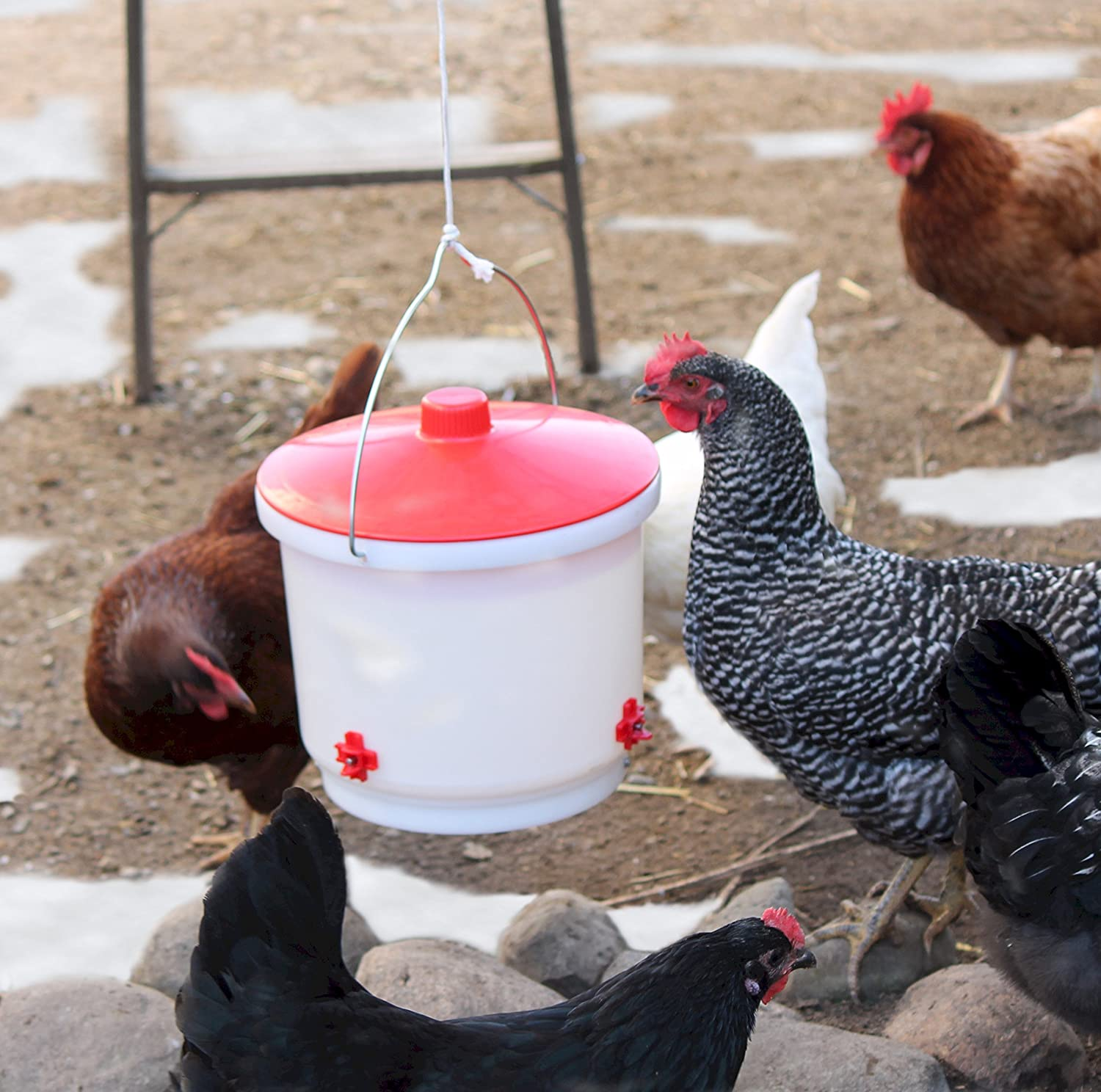 Nesting Base Poultry Chickens Roosters Hens Waterer Durable Red Fits 1 Gallon