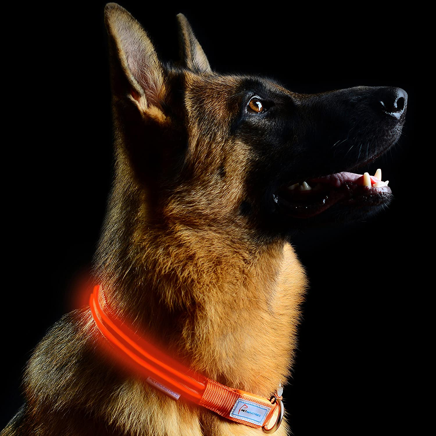 Aerospace orange Large [18.5-23.5\ Aerospace orange Large [18.5-23.5\ Pet Industries Metal Buckle LED Dog Collar, USB Rechargeable, Available in 7 colors & 4 Sizes (Large [18.5-23.5    47-60 cm], Aerospace orange)