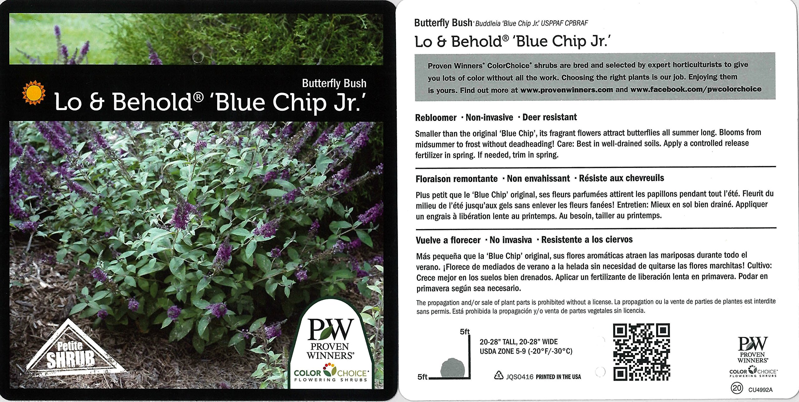 1 Gal. Lo & Behold 'Blue Chip Jr.' Butterfly Bush (Buddleia) Live Shrub, Blue-Purple Flowers by Proven Winners (Image #3)