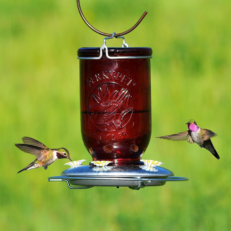 blue feeder ca dp mason perky hummingbird patio garden red pet glass bird jar lawn feeders amazon