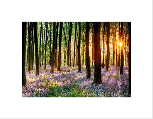 BLUEBELL WOOD SUNRISE TREE MOUNT Picture Canvas art Prints