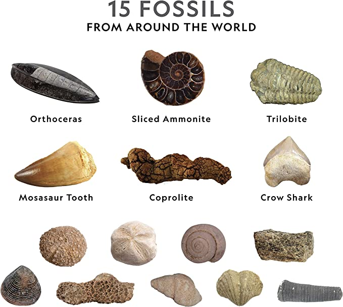 Fossil Set Fossil Kits Fossil Collection Kit with Magnifier