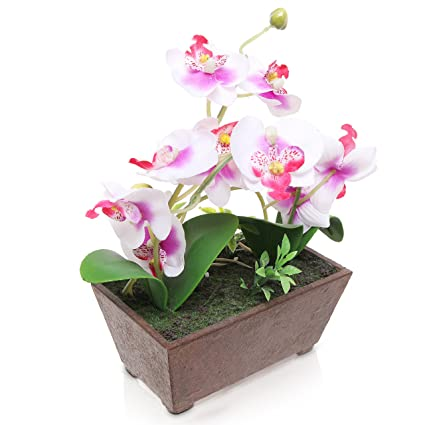 Greatest Amazon.com: Artificial Silk Orchid Flowers in Rectangular Pot  MD11