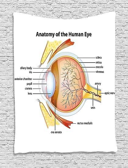 Amazon.com: Ambesonne Educational Tapestry, Human Eye Anatomy Cornea ...