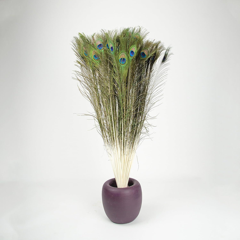 Inter Flowers–10Vere Piume di pavone ca. 100–120cm lungo piume decorative Inter Flowers GmbH