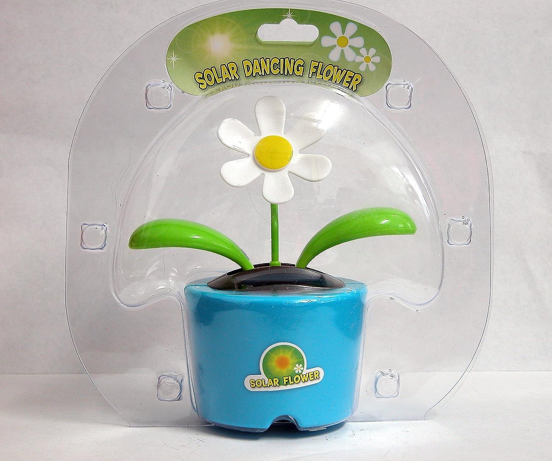 Amazon Solar Dancing Flower Daisy In Bubble Package Pot