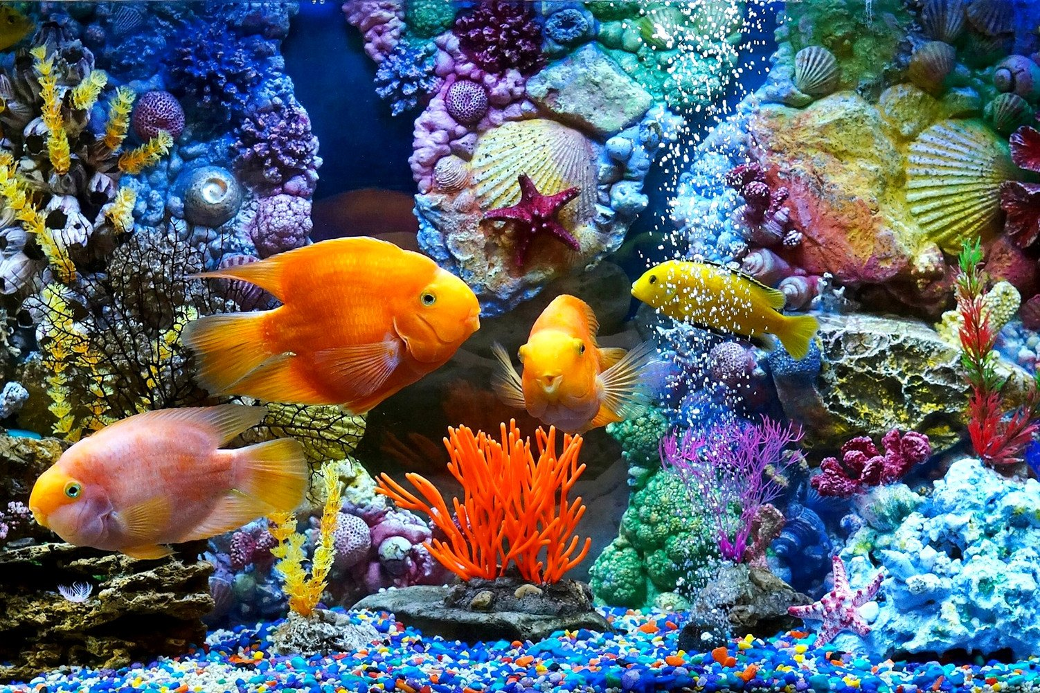 CHOIS Custom Films CF3049 Animal Golden Fishes Tank Corals Glass Window Frosted 4' W by 3' H