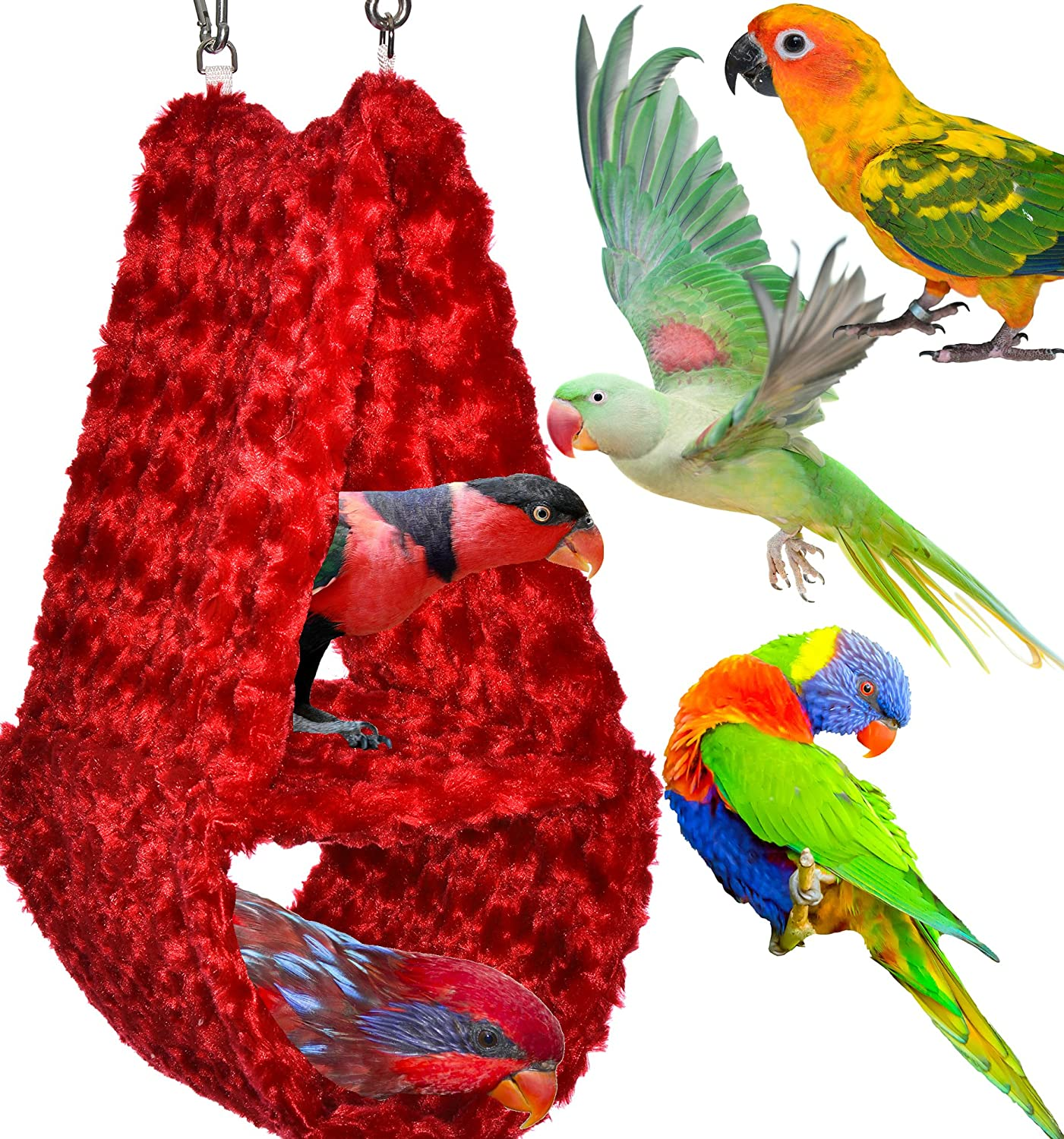 Perfectly Sized For Conures