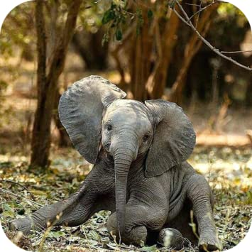 Amazon Com Elephant Wallpaper Appstore For Android