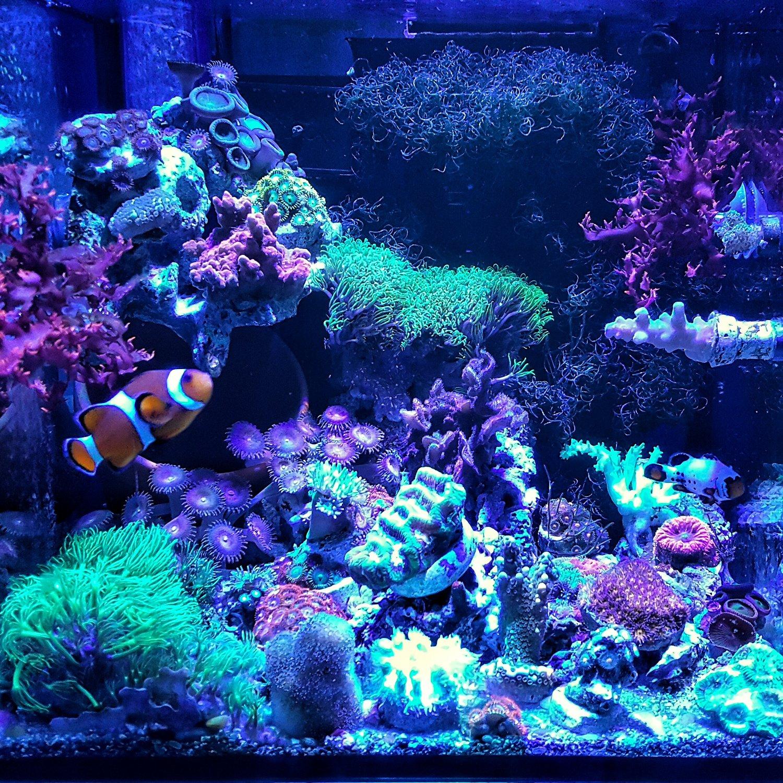 Amazon.com  ABI 12W Tuna Blue LED Bulb Coral Reef Optimized Spectrum PAR38  Pet Supplies  sc 1 st  Amazon.com & Amazon.com : ABI 12W Tuna Blue LED Bulb Coral Reef Optimized ... azcodes.com