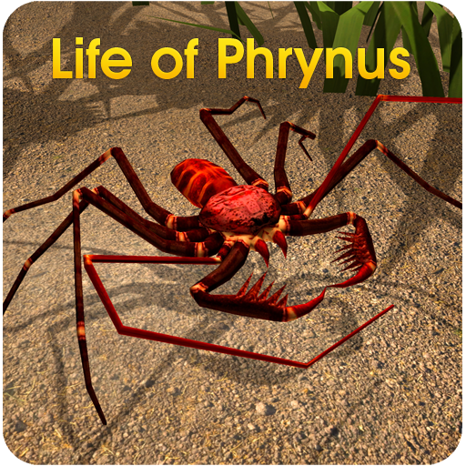 Life of Phrynus - Whip Spider -