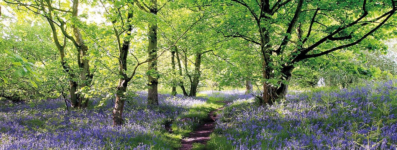 Con campo de flores en el bosque lleno de azul hörcompany Campanilla - 30 x 80 cm color-Calidad: colores brillantes, diseño flotante libre: Amazon.es: Hogar
