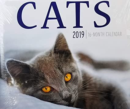 2019 - Calendario de pared para gatos (16 meses): Amazon.es: Oficina y papelería