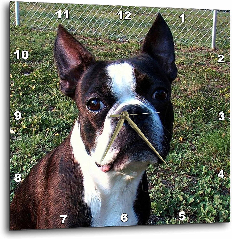 3dRose dpp_49296_3 Boston Terrier Portrait-Wall Clock, 15 by 15-Inch