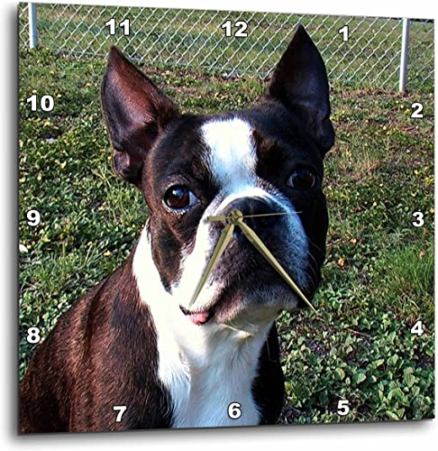3dRose dpp_49296_3 Boston Terrier Portrait-Wall Clock, 15 by 15-Inch