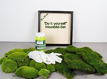 Moos Design DIY Moosbld Selber Machen, Wandbilder Selber Kleben, 100%  Kugelmoos