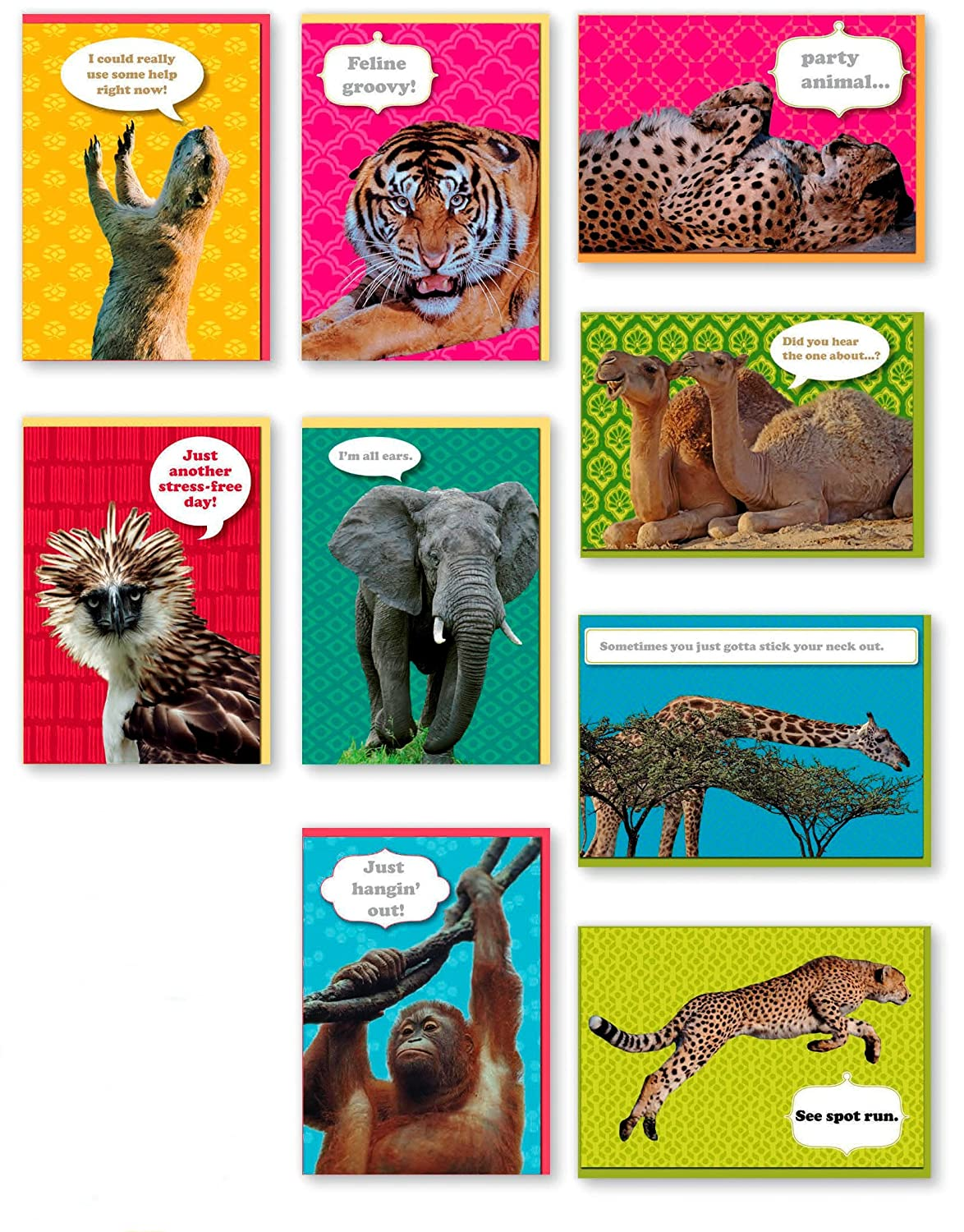 Amazon Assorted 9 Pack Animal Box Set All Occasion National