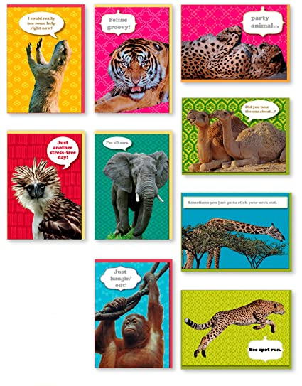 Amazon assorted 9 pack animal box set all occasion national assorted 9 pack animal box set all occasion national geographic greeting cards bulk with tiger m4hsunfo