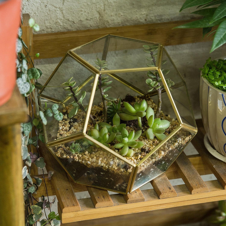 Jincao Terrarium en forme de dod/éca/èdre et plaques de verre pentagonales pour plante Transparent gold copper transparent