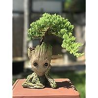 Bonsai de Carcasa Baby Groot