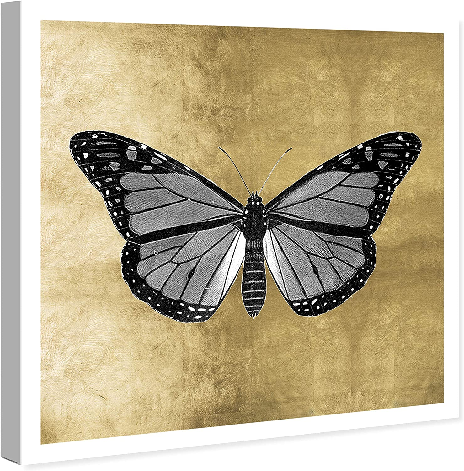 Amazon Com The Oliver Gal Artist Co Animals Wall Art Canvas Prints Butterfly Home Décor 12 X 12 Gold Black Posters Prints