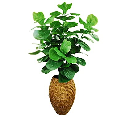 LCG Florals 16TFP49 Fiddle-Leaf Fig Tree in a Scalloped Rope Basket with Spanish Moss, 56