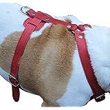 "Genuine Leather Dog Harness, 37""-45"" Chest, 1"" Wide Straps. XXLarge. Newfoundland, Great Dane"