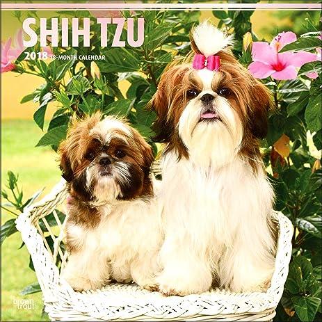 Amazoncom Shih Tzu Calendar 2018 Deluxe Shih Tzus Wall Calendar