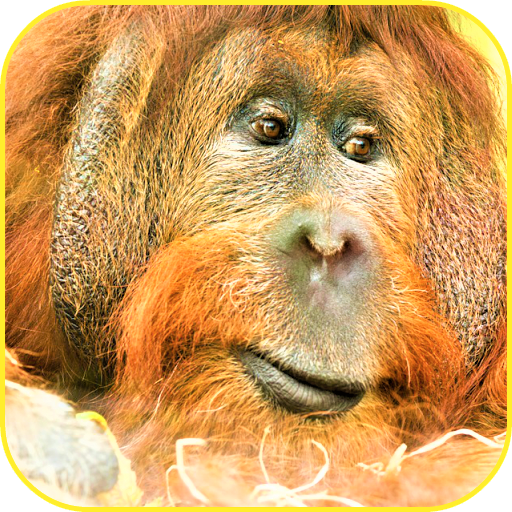 Mandrill Animal - Monkey Wallpaper
