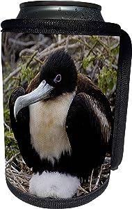 3dRose Danita Delimont - Galapagos Islands - Great frigatebird, Galapagos Islands Ecuador - SA07 POX0480 - Pete Oxford - Can Cooler Bottle Wrap (cc_86280_1)