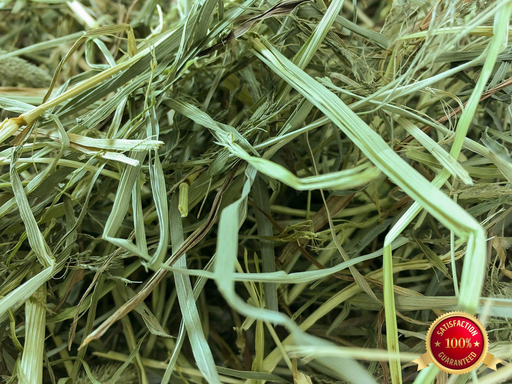 Rabbit Hole Hay Third Cut Timothy Hay (1 lbs.)