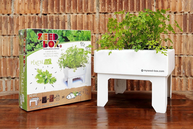 SeedBox SBKSS SBCUPE-Perejil: Amazon.es: Jardín