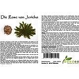 Seedeo® Rose von Jericho (Selaginella lepydophylla) 3 Stück