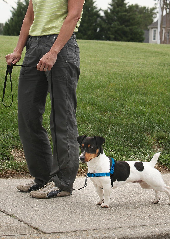 PetSafe Easy Walk Deluxe Hundegeschirr blau