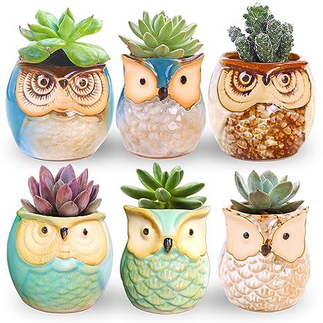 Review ROSE CREATE 6 Pcs 2.5 Inches Owl Pots, Little Ceramic Succulent Bonsai Pots with a Hole - Pack of 6