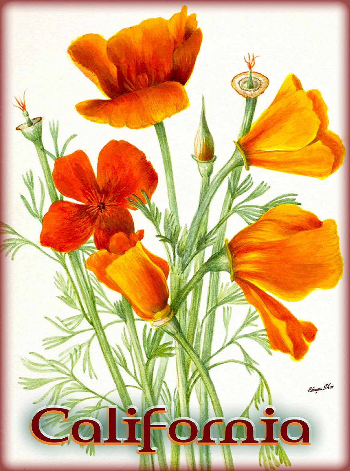 Amazon A Slice In Time California Poppy Poppies Flower Flowers
