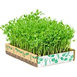 The Simply Good Box By Home Greens - The Simplest Way to Grow Amazing Microgreens