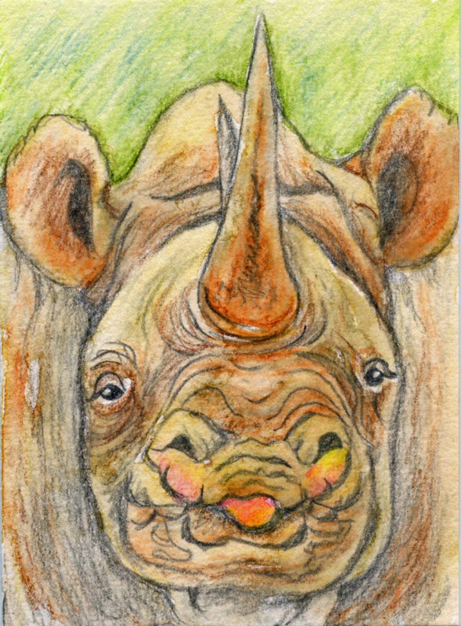 Rhinoceros African Wildlife Animal-Free Shipping- Artist Trading Card Original Drawing-Carla Smale