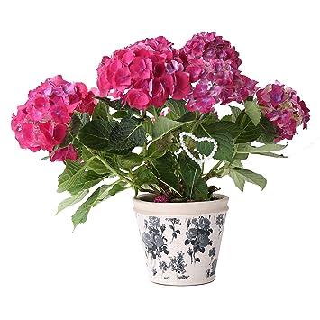 Pot De Fleur Cache Pot En Terre Cuite Peint à La Main Aspect