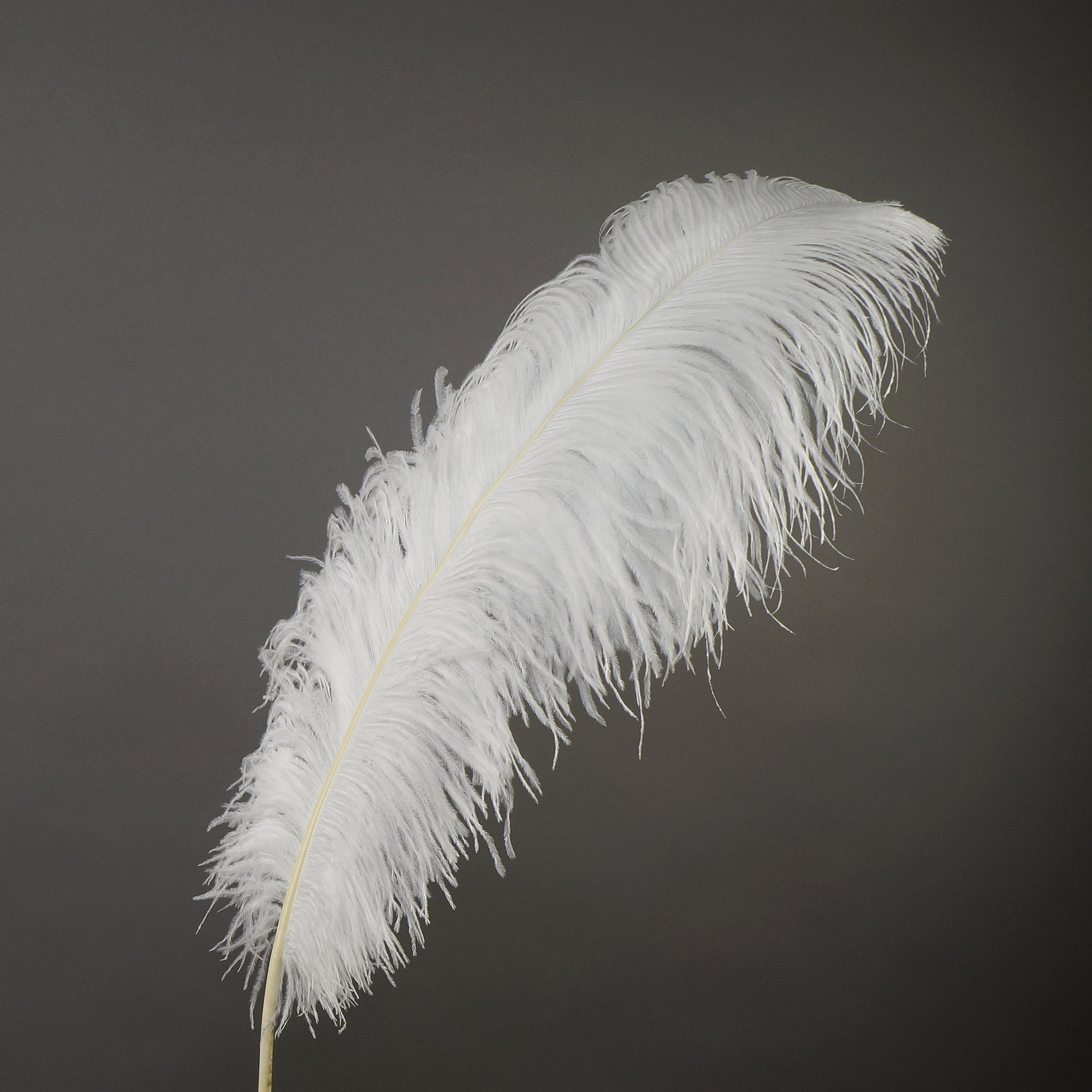 ZUCKER Ostrich Feathers Selected Drabs - 17-25'' - 25pcs - White