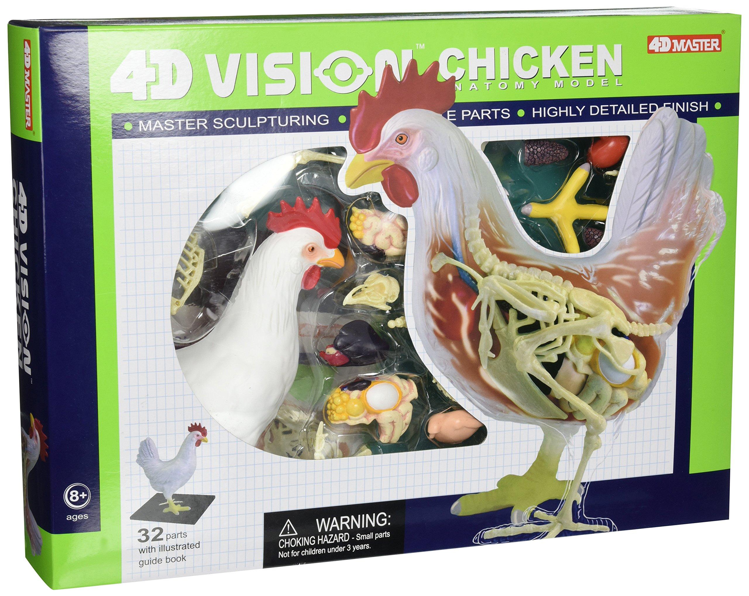 Tedco 4D Vision Chicken Anatomy Model