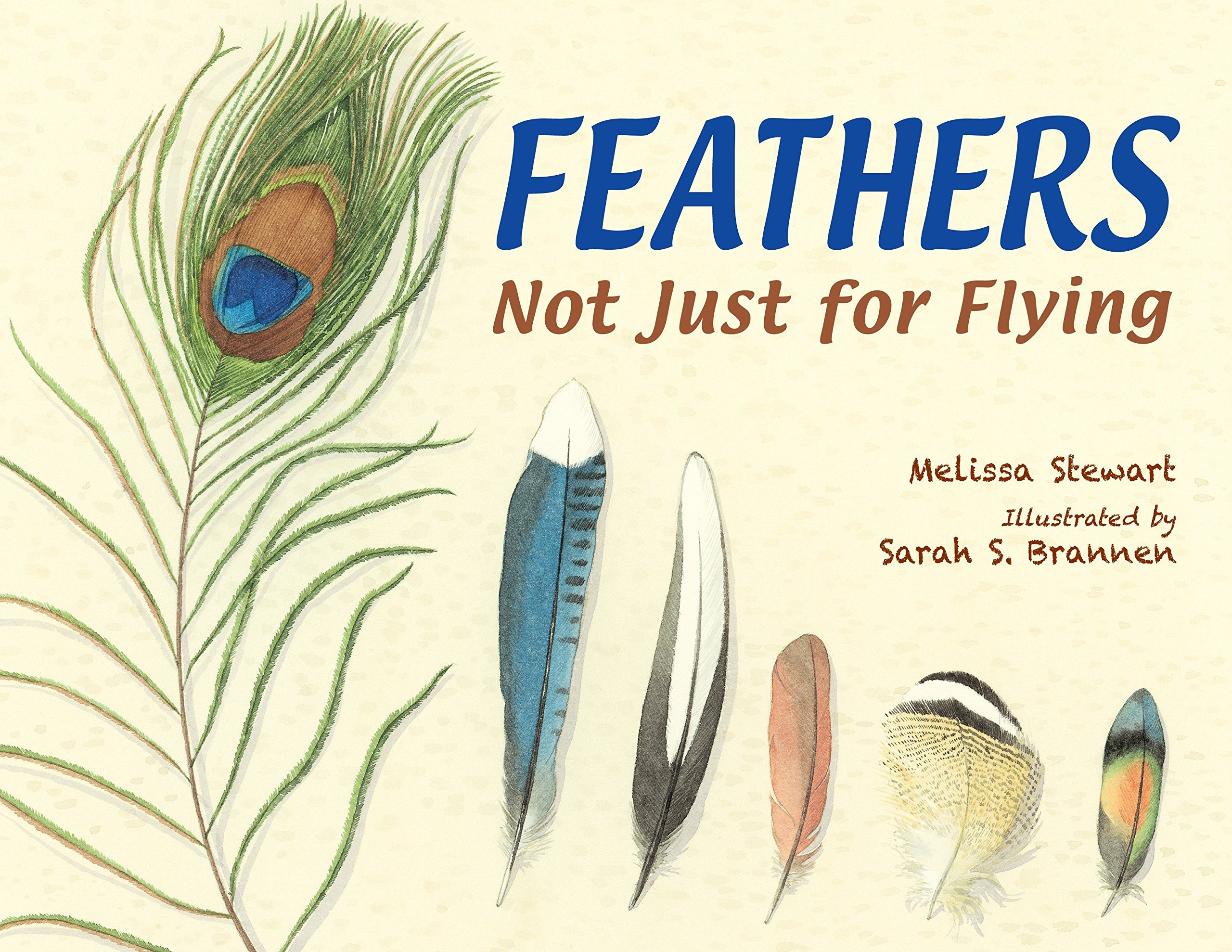 feathers not just for flying melissa stewart sarah s brannen