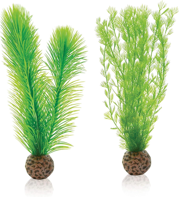 Small biOrb Easy Plant Feather Fern