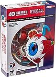 4D Anatomy Eyeball Model by Tedco Toys